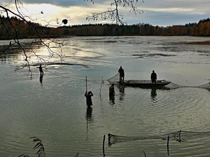 FOTKA - Výlov Příbrazského rybníka