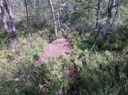 FOTKA - mraveniště na blatech