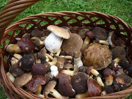 FOTKA - další houbový košík