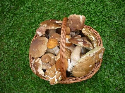 FOTKA - Košík plný hříbků