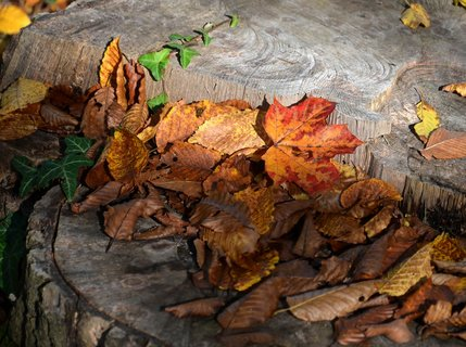 FOTKA - Podzimní zastavení v přírodě