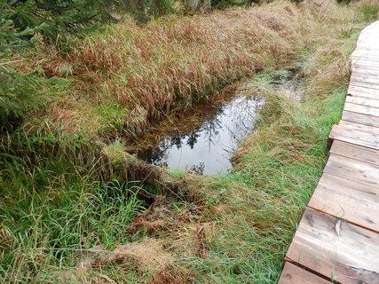 FOTKA - revitalizace Cikánské slati -podstatou je zadržet vodu v území, aby se zachovaly zdejší unikátní mokřady