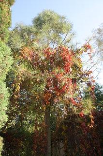 FOTKA - barevná borovička