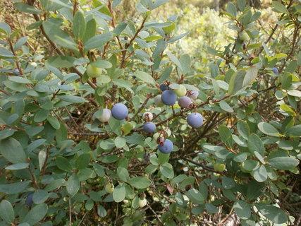 FOTKA - lákavé plody vlochyně