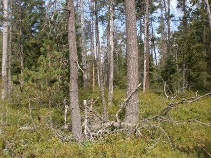 FOTKA - suché větve