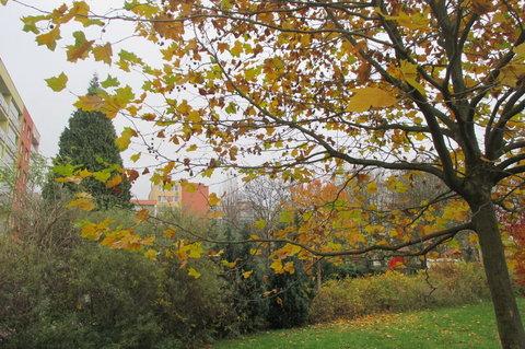 FOTKA - Podzim mezi  panel�ky