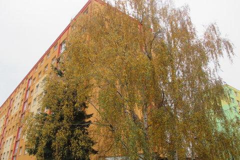 FOTKA - Strom panelák určitě  přeroste