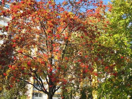 FOTKA - Barvy podzimu na sídlišti