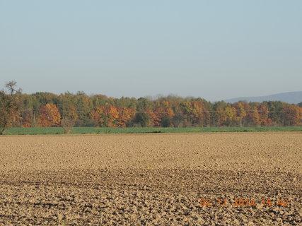 FOTKA - Krásně slunečný den 2.11.2014