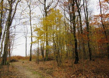FOTKA - Na kraji lesa