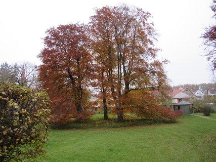 FOTKA - podzimní z parku