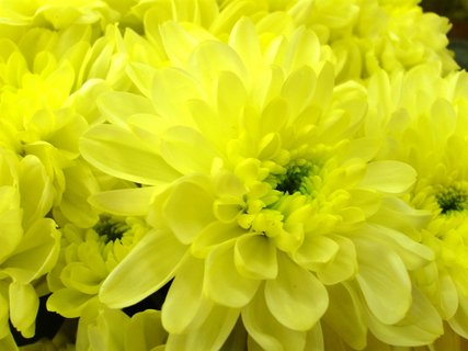 FOTKA - krásná žlutá