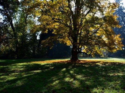 FOTKA - Zlatavé ráno v parku