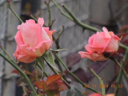 FOTKA - A kvetou a kvetou