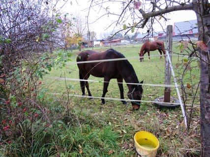 FOTKA - Burgfarnbach..statek..koně
