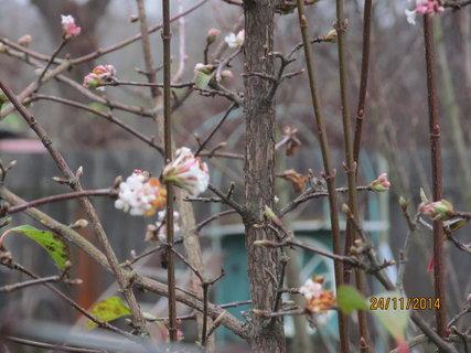 FOTKA - Květy u sousedů