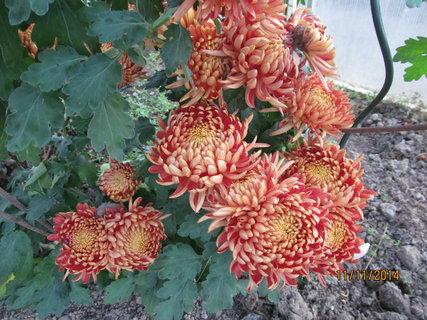 FOTKA - Květy z blízka