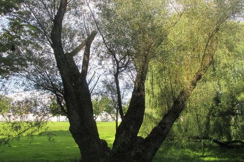 FOTKA - Vzpomínka na slunečné počasí :  září Ctěnice