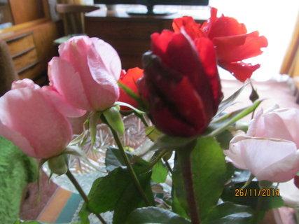 FOTKA - Růže ve váze na konci listopadu
