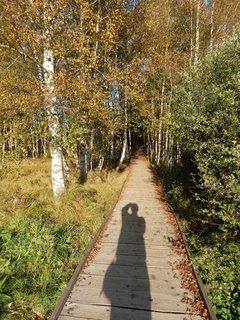 FOTKA - stíny se dlouží- vzpomínky na krásné dny na Šumavě *chodníček do Chalupské slati