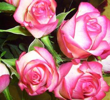 FOTKA - bílo - růžové