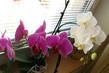něžné květy orchideí