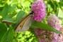 motýl na květu-