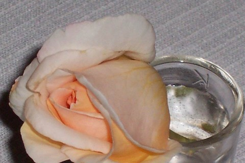 FOTKA - růžička ve štamprli