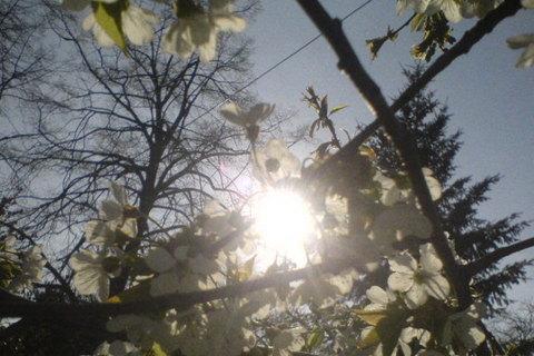 FOTKA - slunce za větvičkou