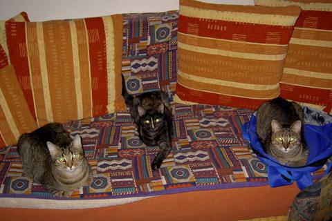 FOTKA - kočičí komando
