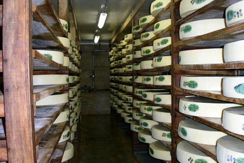 FOTKA - Sýrárna ve Francii