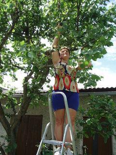 FOTKA - stříhám meruňku