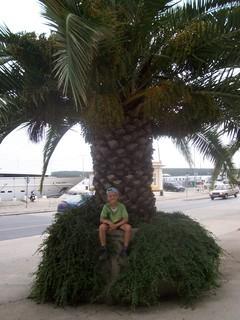 FOTKA - Filda  na palmě v Chorvatsku