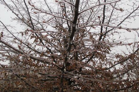 FOTKA - Dnes v parku:  všechny větvičky poctivě pokryté