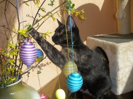 FOTKA - Merry a Velikonoce