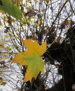 FOTKA - list na stromě