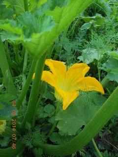 FOTKA - květ v zajetí zeleně