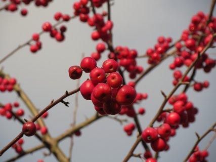 FOTKA - krasne cervene
