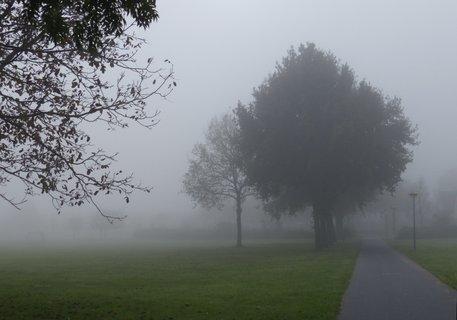 FOTKA - mlha v parku