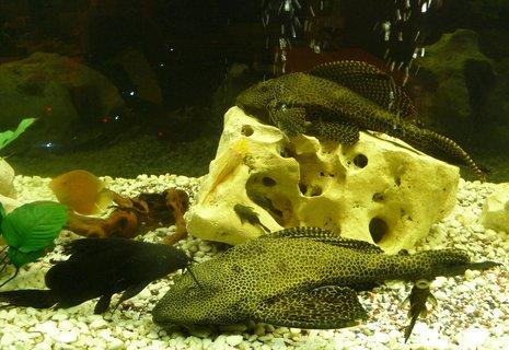 FOTKA - Pohoda na dně akvária