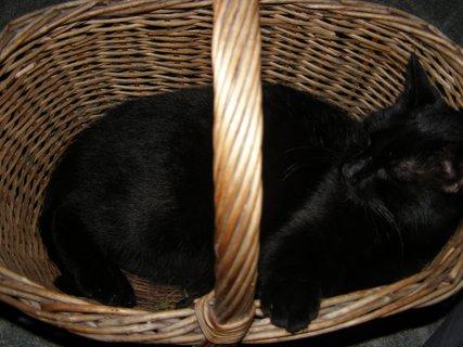 FOTKA - šimon v košíku