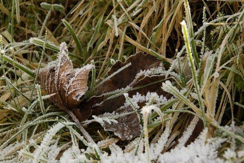 FOTKA - Štědrodenní procházka okolo Ritzensee - Listy v trávě