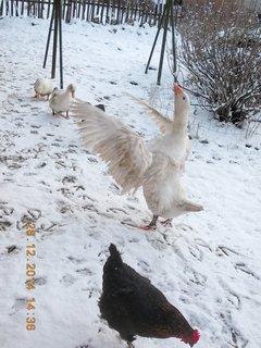 FOTKA - mává křídlama