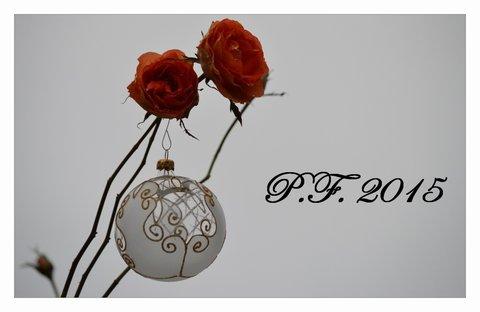 FOTKA - PF ko na růži
