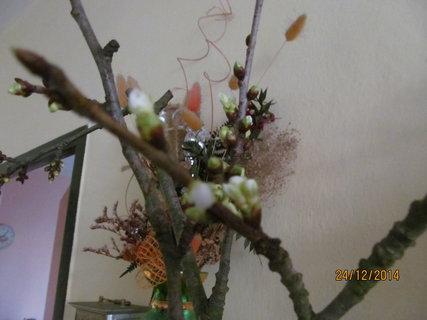 FOTKA - Rozkvetlá větvička třešně