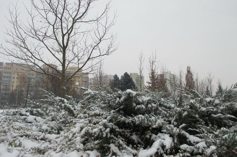 FOTKA - JS: Nebe je nad námi A z nebe padá mi Do vlasů sníh