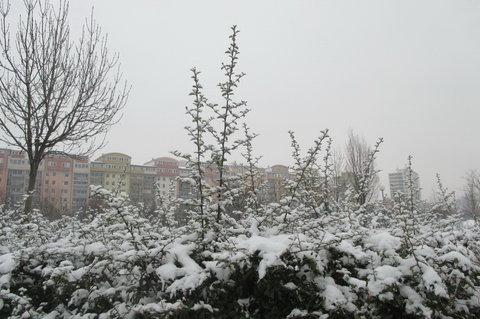 FOTKA - Když tak venku sněží sněží,přestáváme býti svěží.