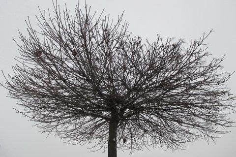 FOTKA - Na stejné zemi co my, bydlí tu s námi stromy mlčí a hledí si svého