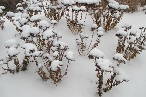 FOTKA - Sníh patří do skupenství tuhého, koulujeme proto jeden druhého...