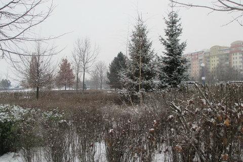 FOTKA - Zima zima, čas je zlý, budem radši zalezlí...